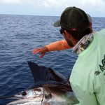 anna maria island sailfish