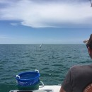 Anna Maria Island Tarpon Fishing – June 23, 2015 – Captain Aaron Lowman