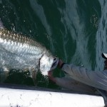 Reviving Tarpon