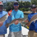 Anna Maria Island Fishing Guide – April 22, 2016