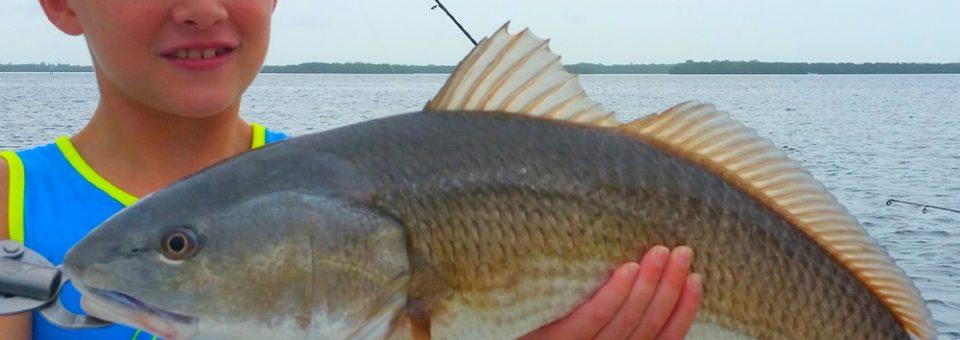 Anna Maria Island Redfish in August