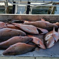 Anna Maria Island Snapper Fishing – February 2019