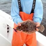 anna maria island flounder