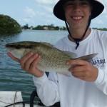 mangrove snapper