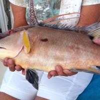 Anna Maria Island Fishing Guide – December 31, 2015