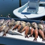 sheepshead and snapper