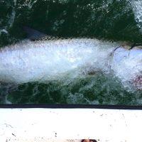 Anna Maria Island Fishing Guide – May 14, 2016