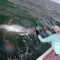 Tarpon Fishing Anna Maria Island- June 30, 2016