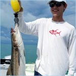 Cobia in the chumline