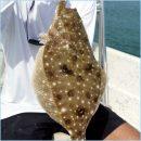 Snook & Flounder-July-Anna Maria Island