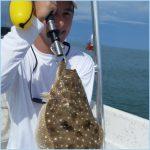 Flounder hit a shiner