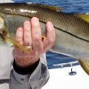 Anna Maria Island Spring Fishing