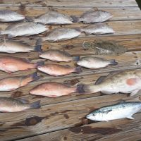 August Tampa Bay Fishing Report-2018